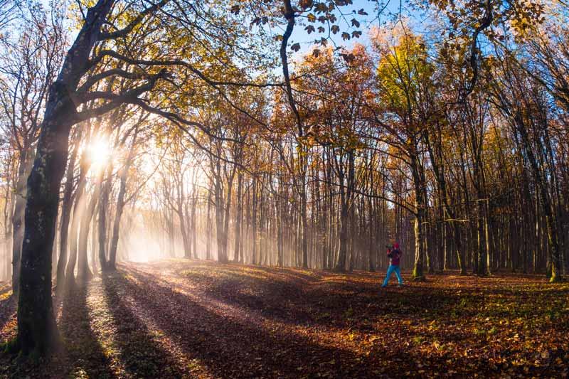 Parco delle Foreste Casentinesi Monte Falterona e Campigna