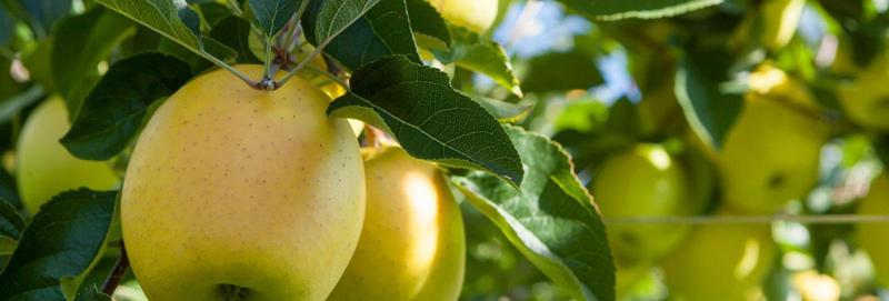 mela alto adige