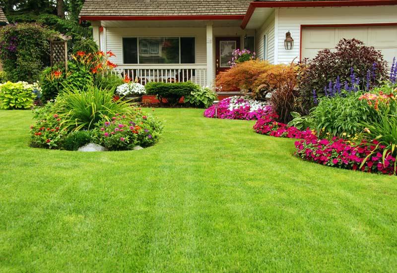 L'erba del vicino è sempre più verde