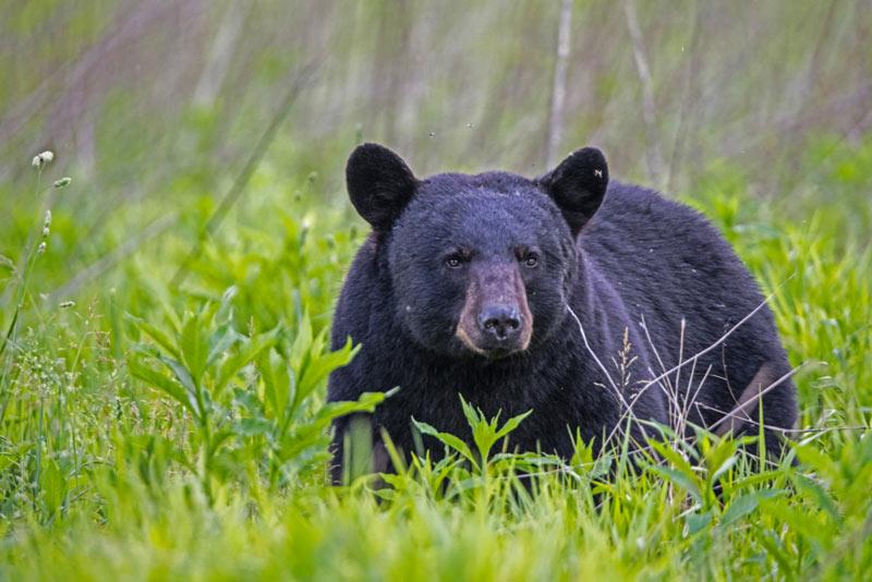 San Romedio e l'orso