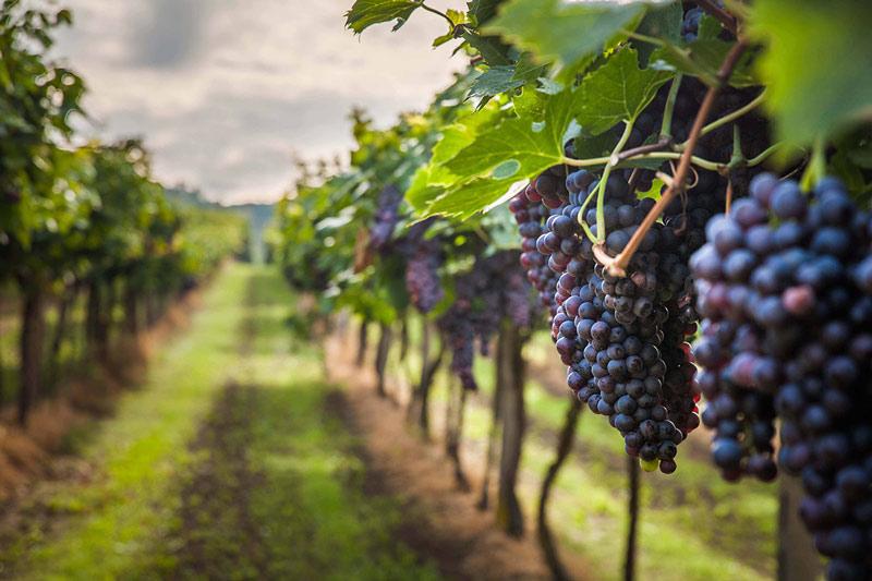 strade vino sicilia