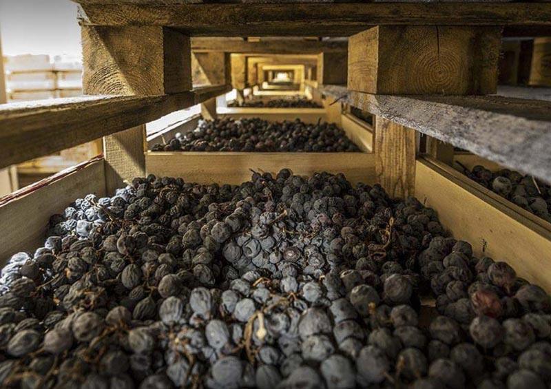 Amarone della Volpicella